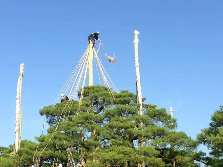 兼六園の雪吊り_e0037439_11083316.jpg
