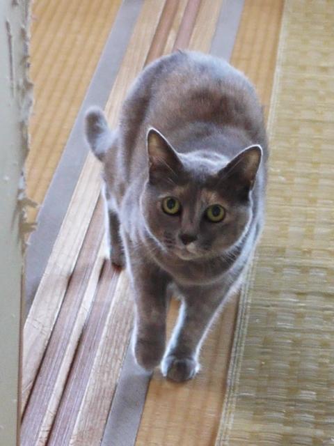 猫のお留守番 あずきちゃん編。_a0143140_21352388.jpg