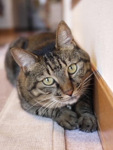 猫のお留守番 ゆずちゃん編。_a0143140_21384571.jpg