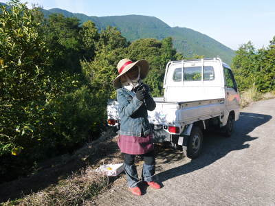 香り高き柚子 令和元年度の収穫が始まりました!「冬至用柚子」も予約受付中!ただし早い者勝ちです!_a0254656_16591603.jpg