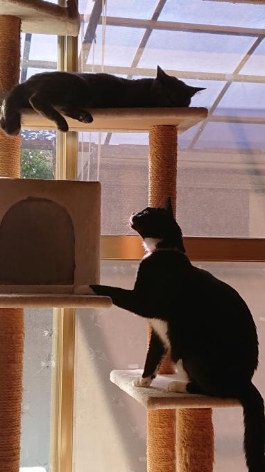 黒ネコのまめネコちゃん完成しました♪_f0374160_20564582.jpg