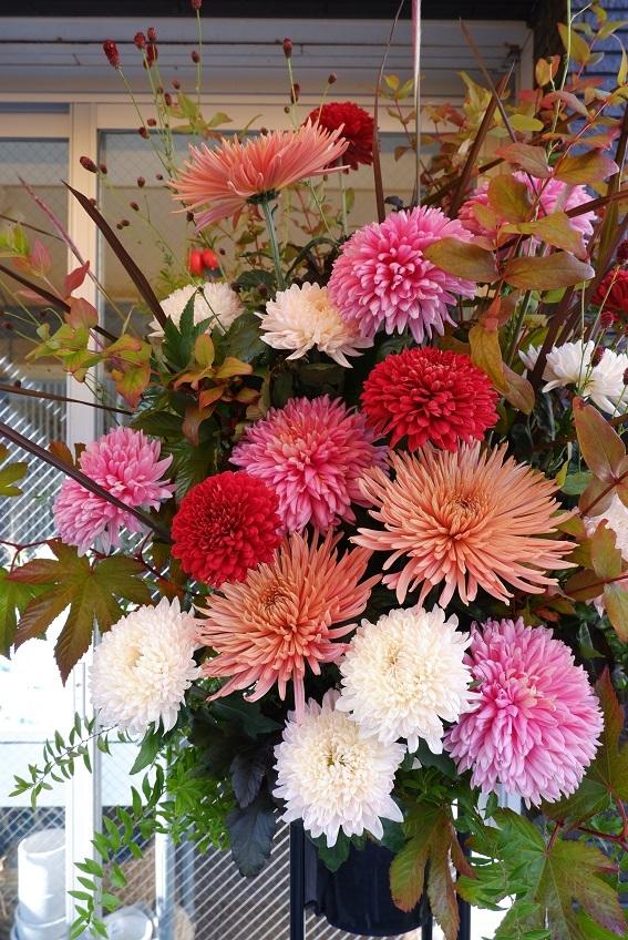 オークリーフ(大輪菊のスタンド装花)_f0049672_18544028.jpg