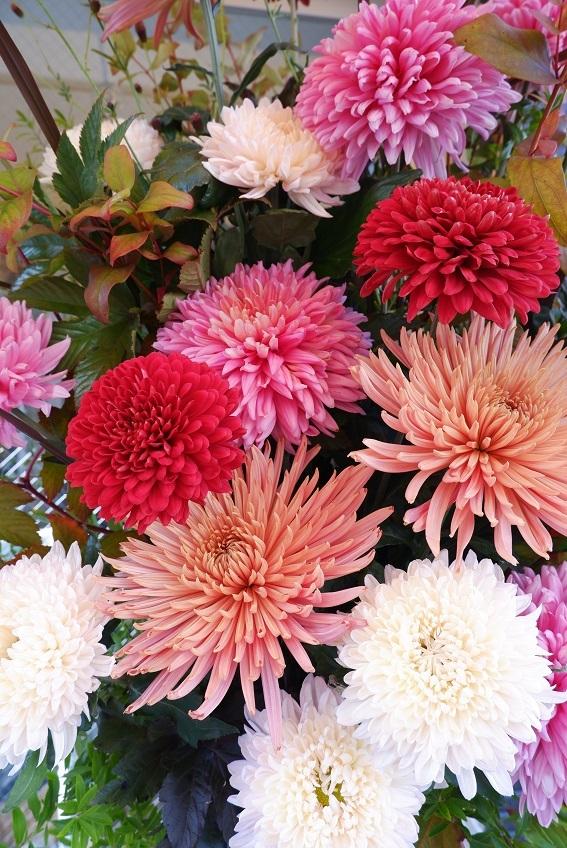 オークリーフ(大輪菊のスタンド装花)_f0049672_18544861.jpg