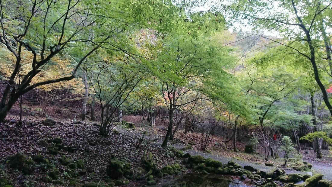 河口湖旅行 1日目_e0212073_13415910.jpg