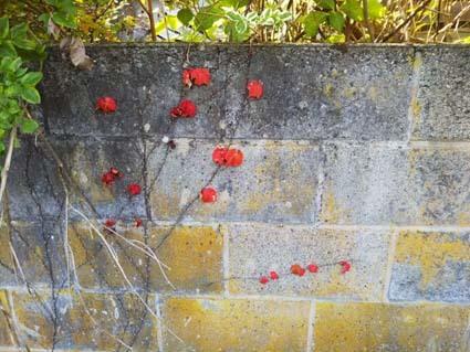 ブロックの壁が好き。秋~冬の小春日和は、ブロック塀が、いいよ。_b0126182_22101573.jpg