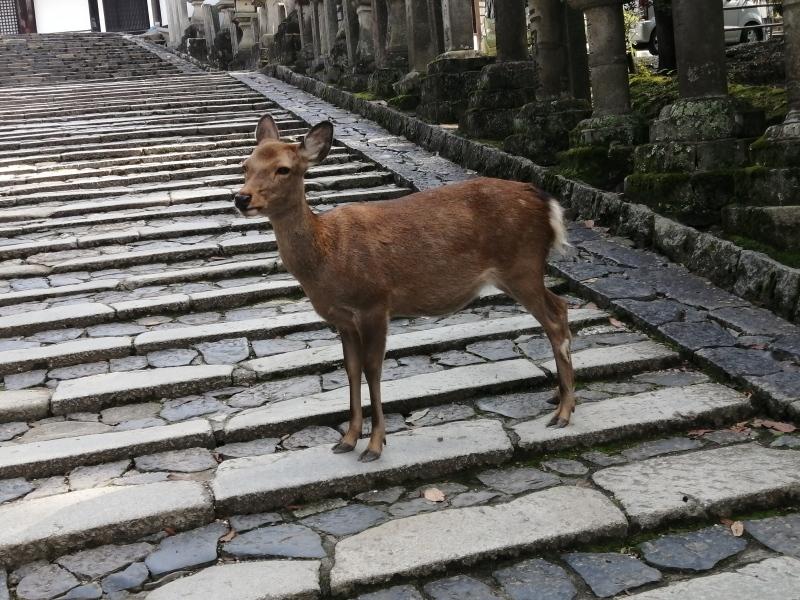 奈良旅 ②_f0374092_22302015.jpg