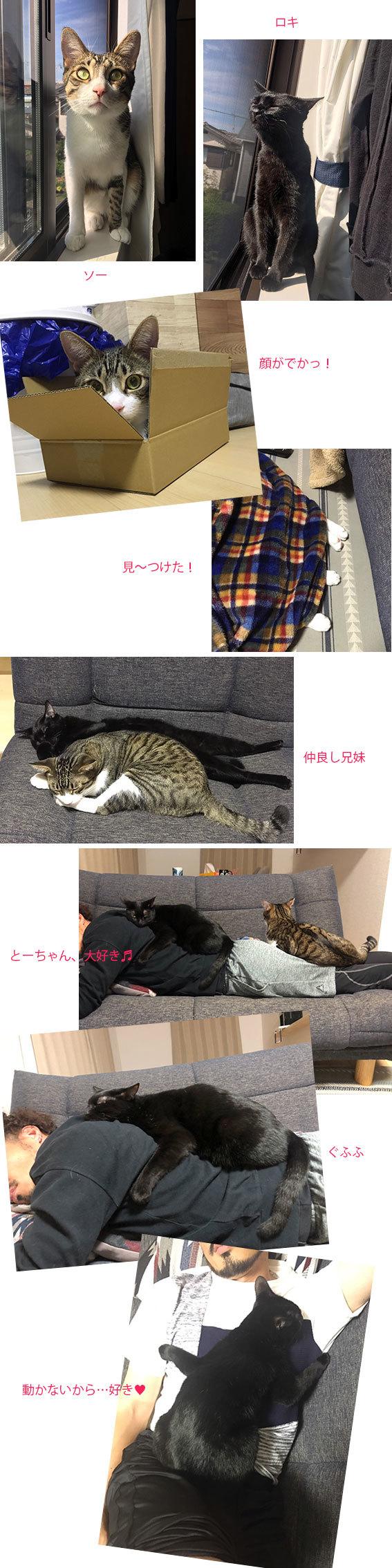 猫展とランチ&ロキとソー通信&アキちゃん通信_d0071596_22225146.jpg