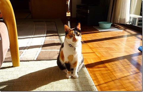 猫展とランチ&ロキとソー通信&アキちゃん通信_d0071596_22423841.jpg