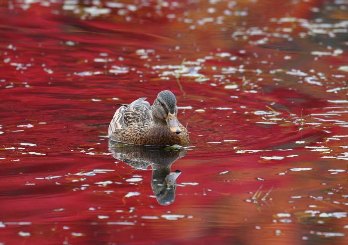 秋色の池にて・・・_c0113597_13350207.jpg