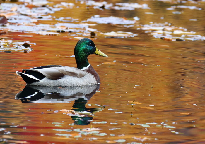 秋色の池にて・・・_c0113597_13351731.jpg