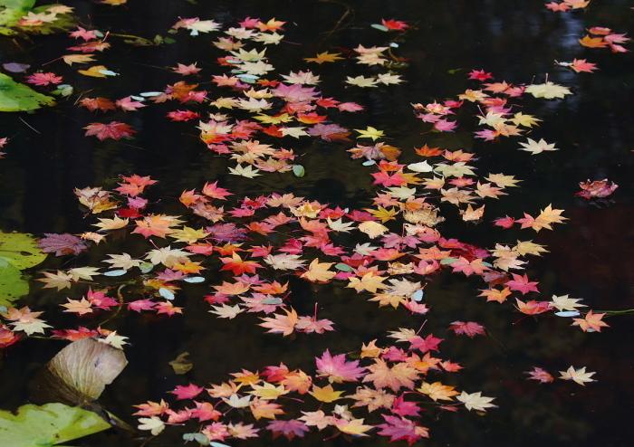 秋色の池にて・・・_c0113597_13352965.jpg