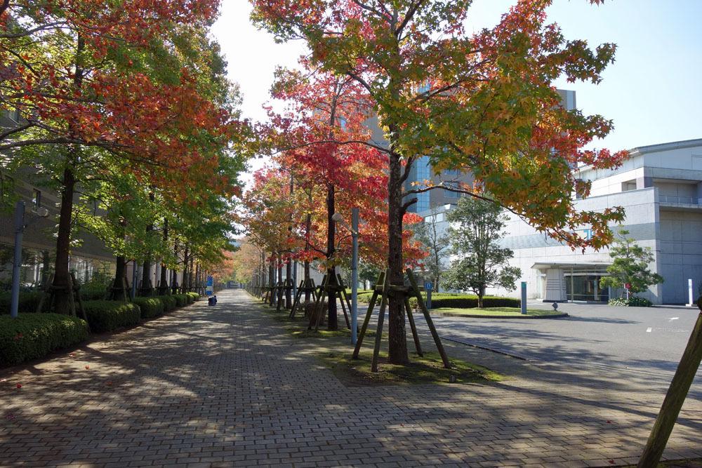 城西国際大学を見学_b0114798_16295212.jpg