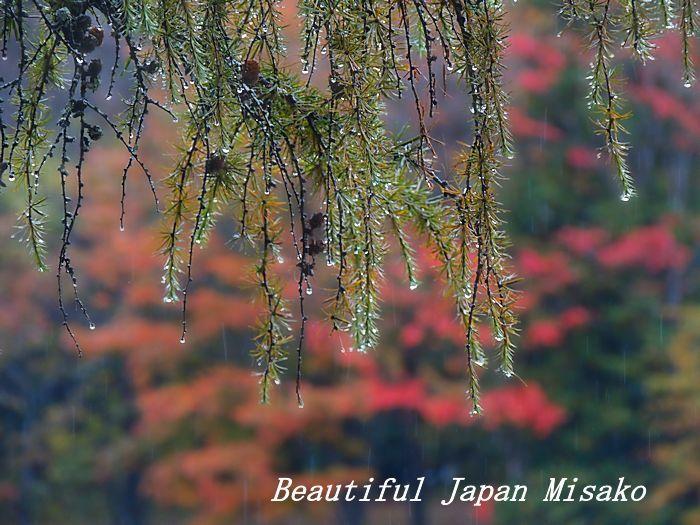 秋の雫・゚☆、・:`☆・・゚・゚☆。。_c0067206_21152177.jpg