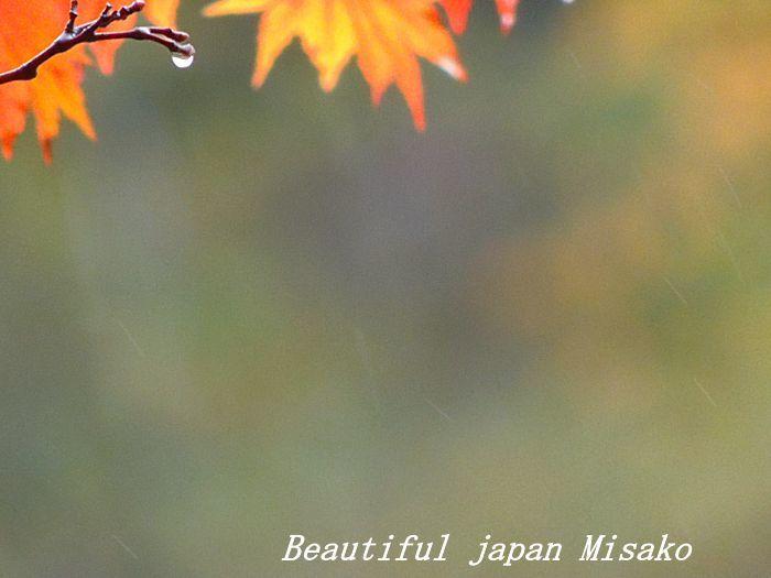 秋の雫・゚☆、・:`☆・・゚・゚☆。。_c0067206_21153035.jpg