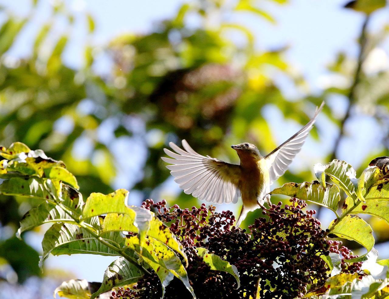 冬鳥が早々と・・・_c0213607_18313793.jpg