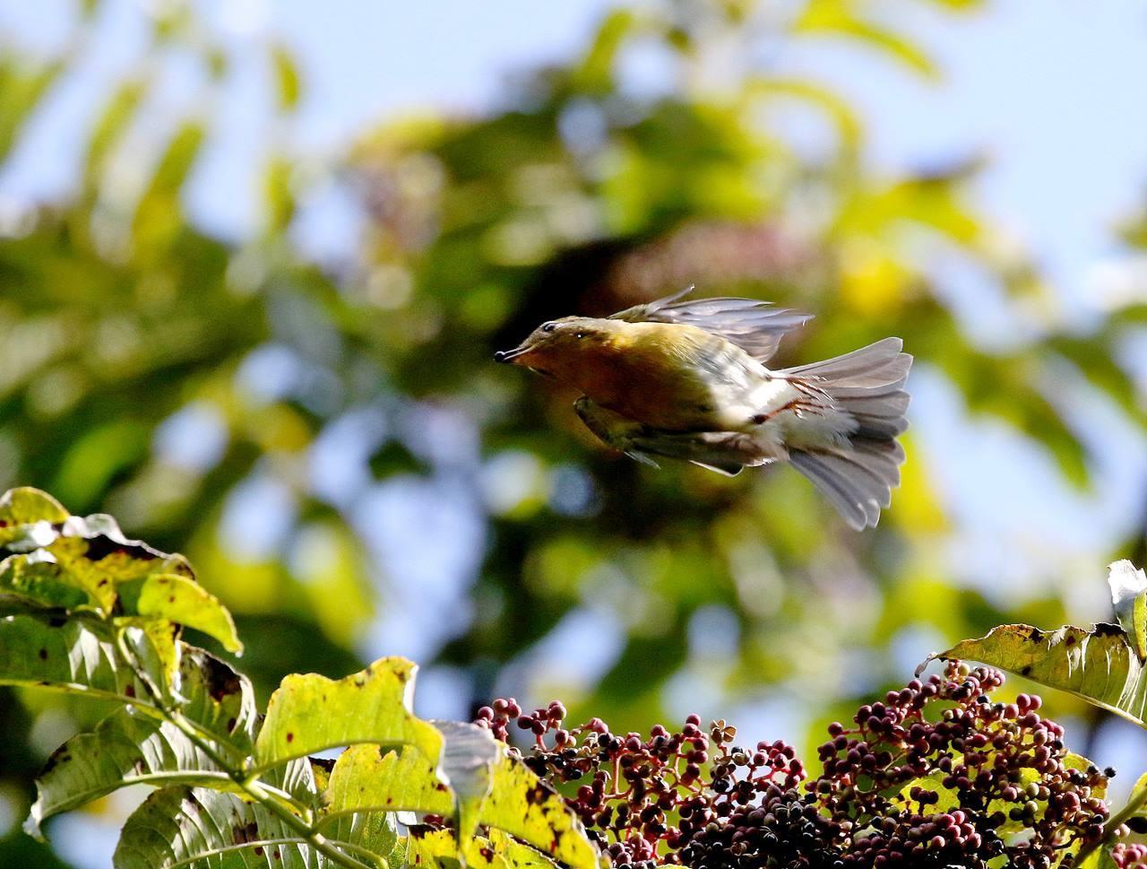 冬鳥が早々と・・・_c0213607_18314734.jpg