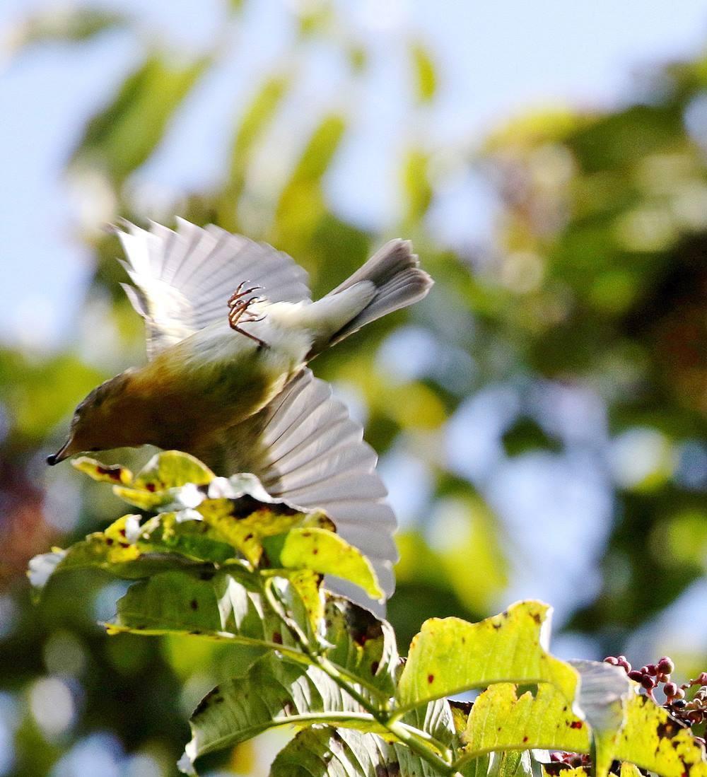 冬鳥が早々と・・・_c0213607_18315221.jpg