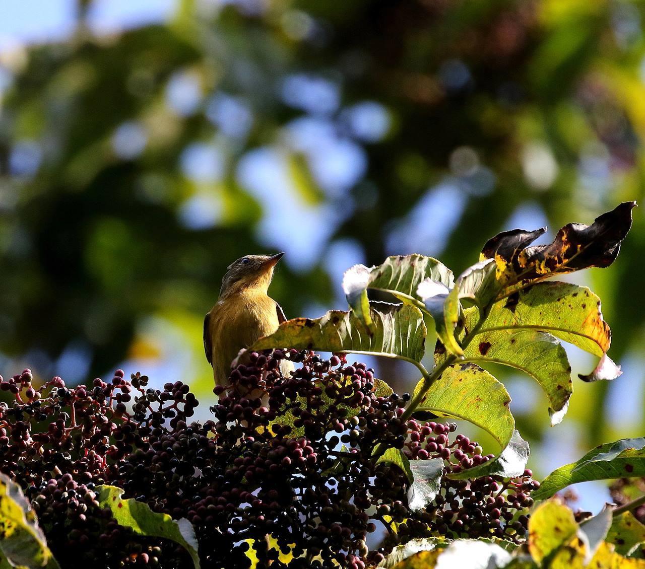 冬鳥が早々と・・・_c0213607_18315730.jpg