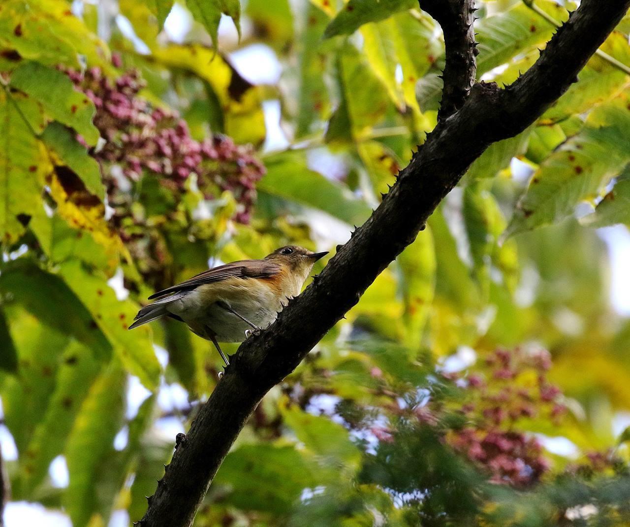 冬鳥が早々と・・・_c0213607_18320550.jpg