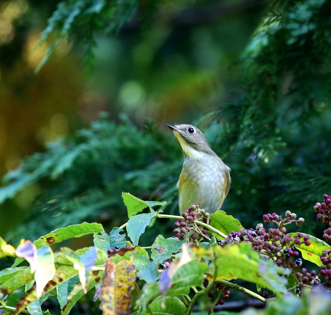 冬鳥が早々と・・・_c0213607_18331029.jpg