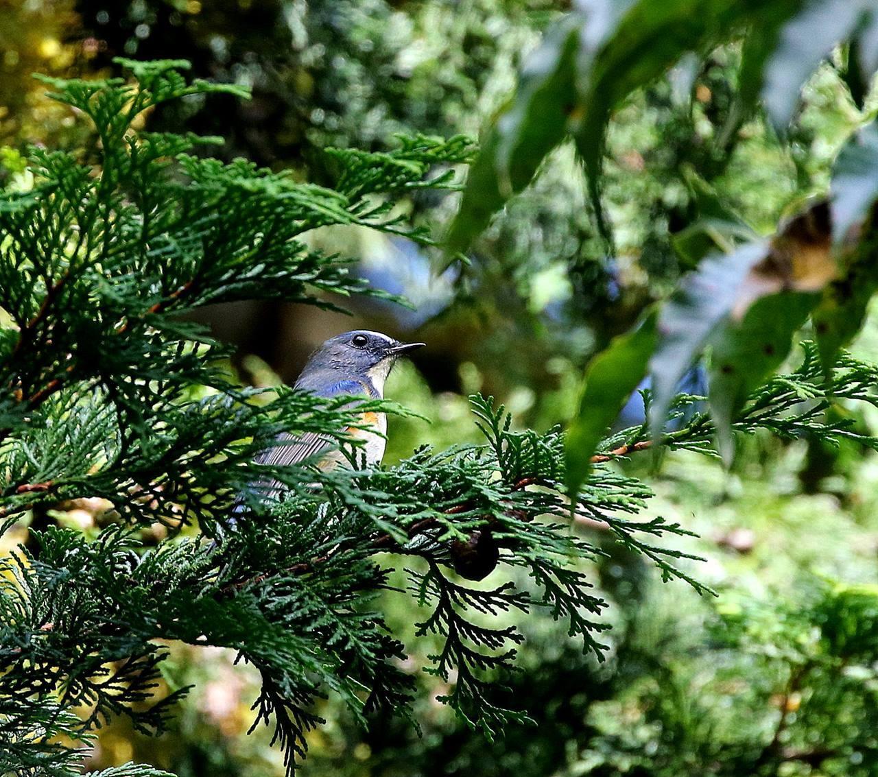 冬鳥が早々と・・・_c0213607_18331309.jpg
