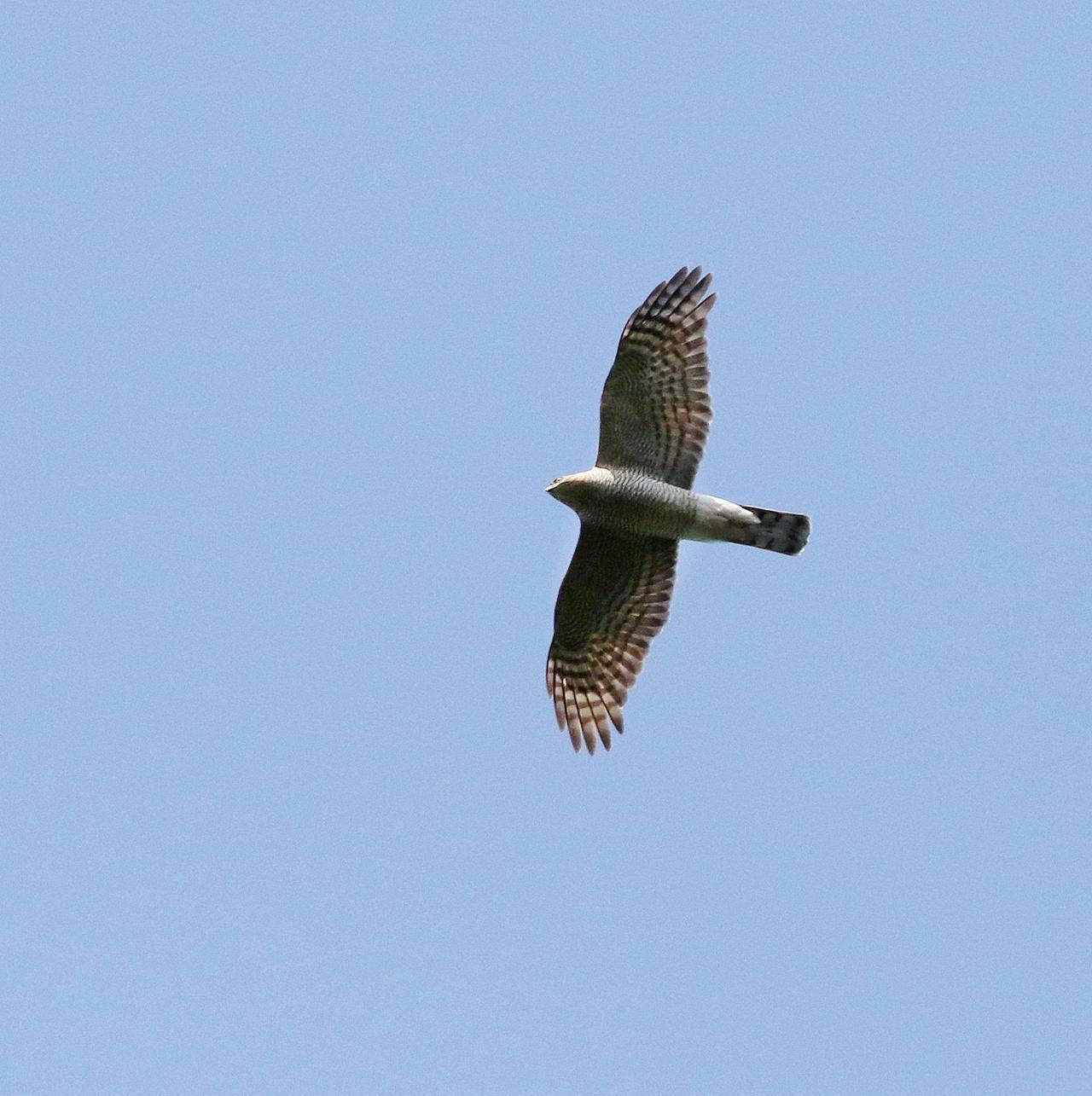 冬鳥が早々と・・・_c0213607_18333766.jpg