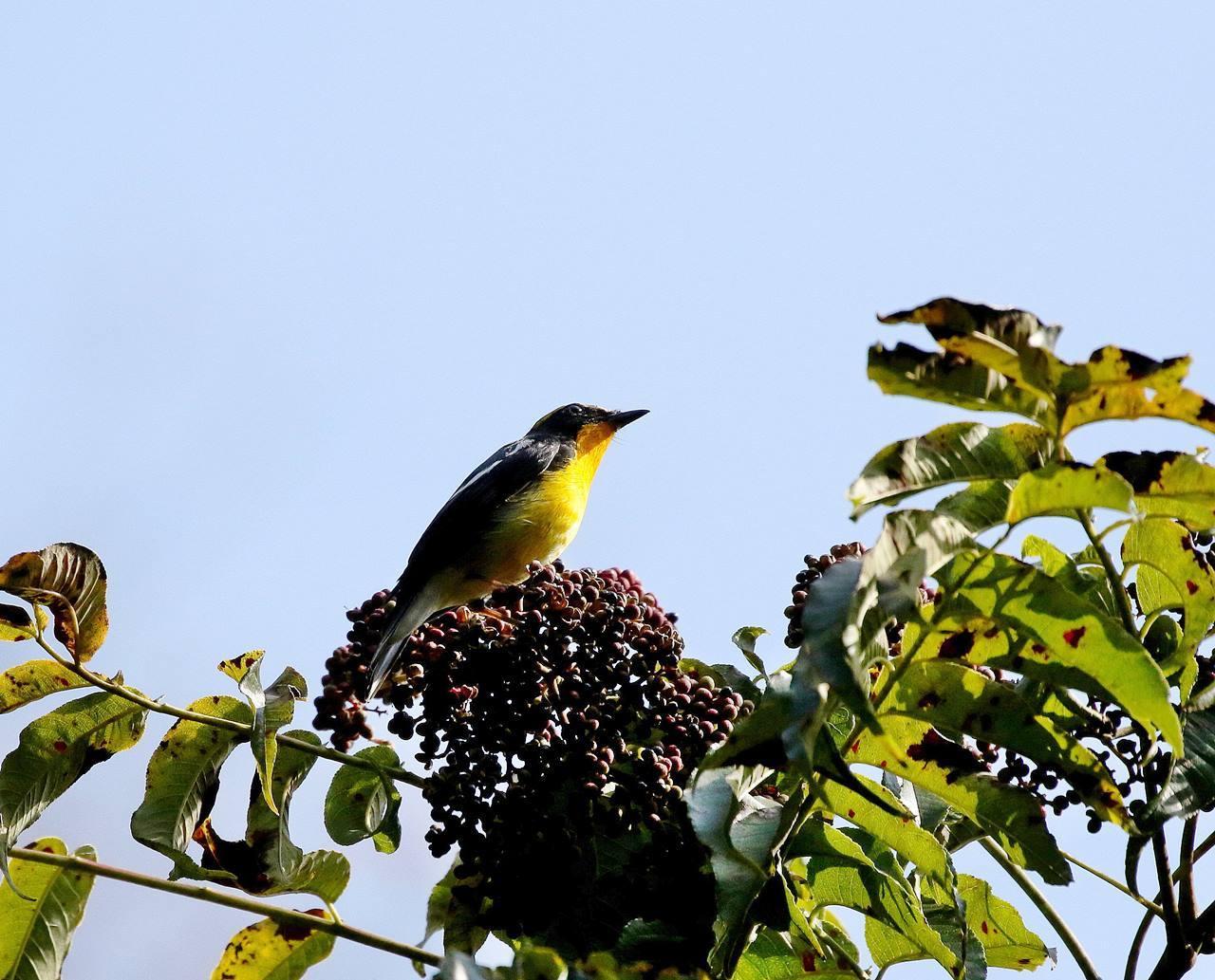 冬鳥が早々と・・・_c0213607_18371711.jpg