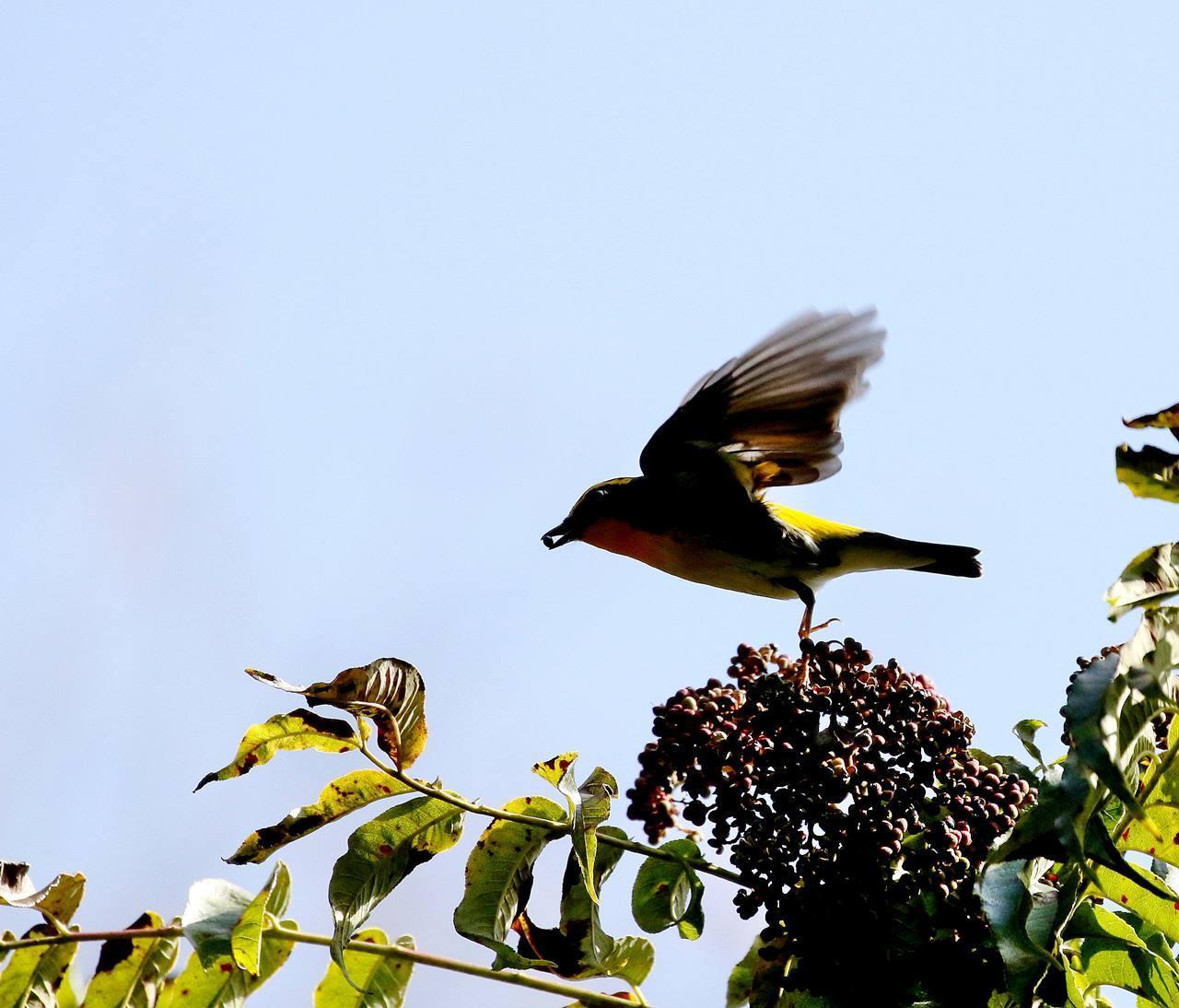 冬鳥が早々と・・・_c0213607_18372267.jpg