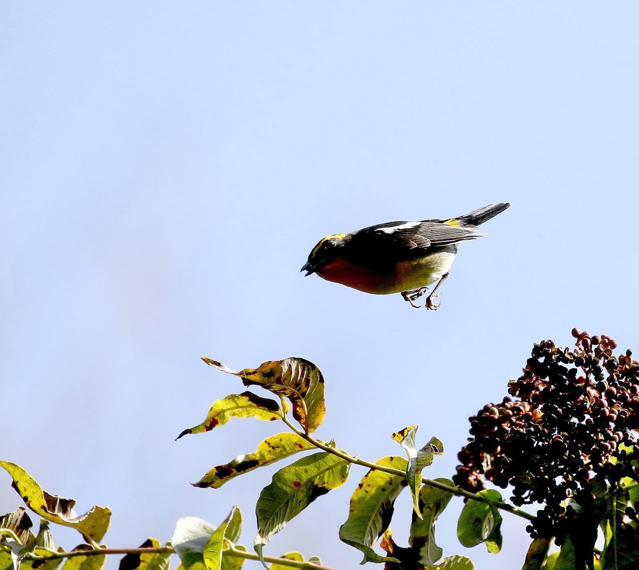 冬鳥が早々と・・・_c0213607_18372690.jpg