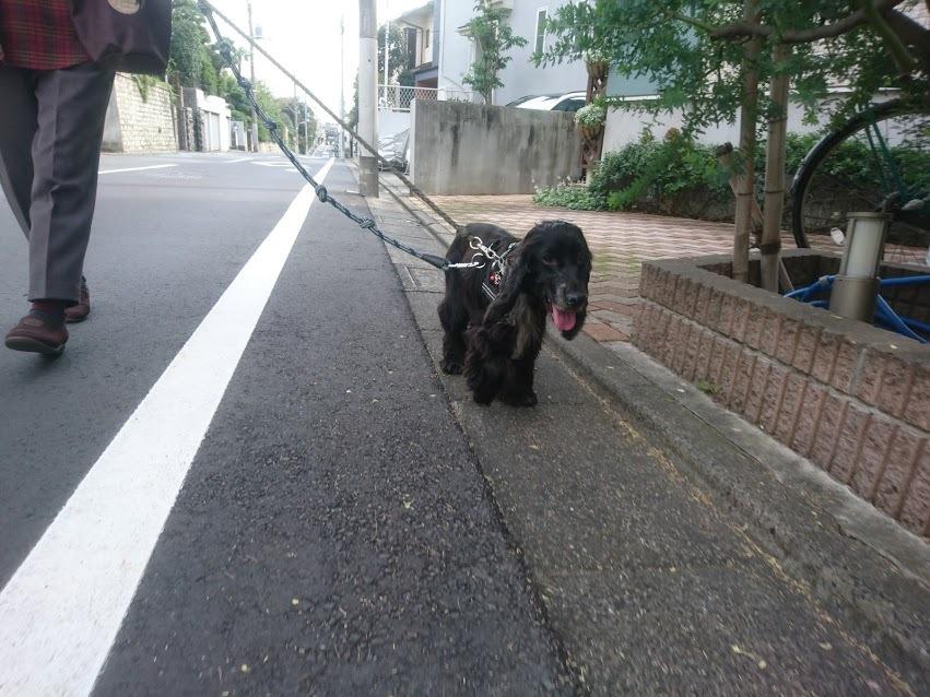 お散歩上手です_b0046520_00234691.jpg