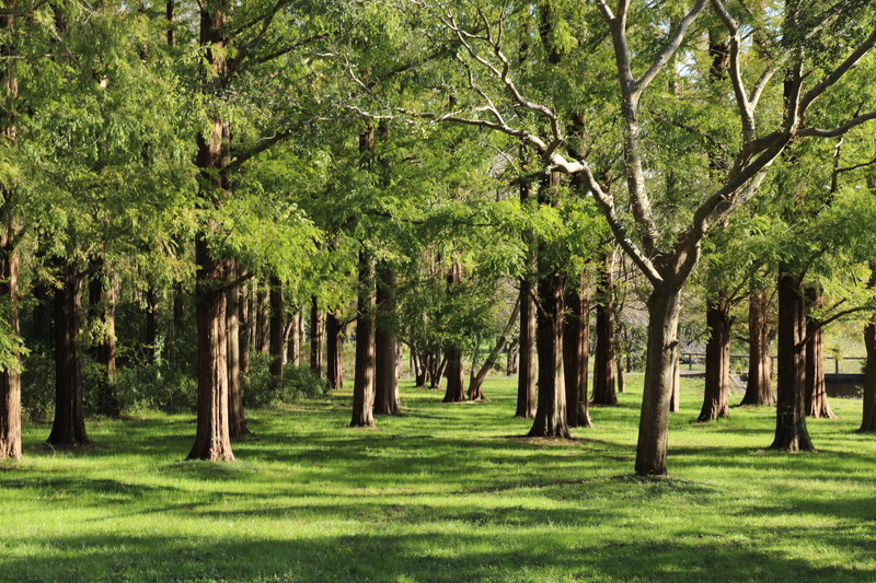 メタセコイア並木と水元公園と陸亀。_a0214329_14423379.jpg