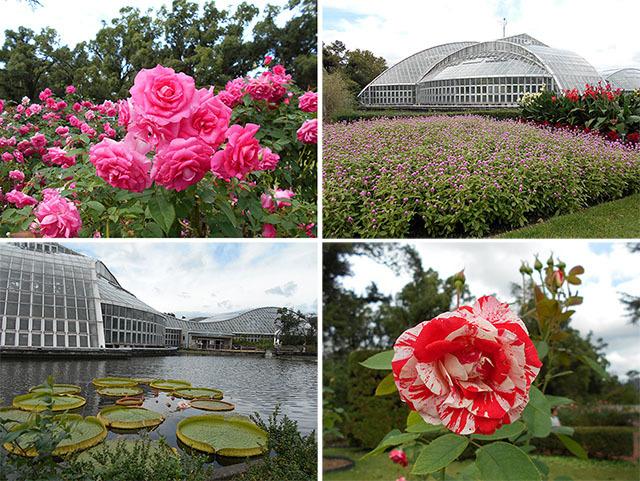 京都・京都府立植物園_a0099744_17332479.jpg