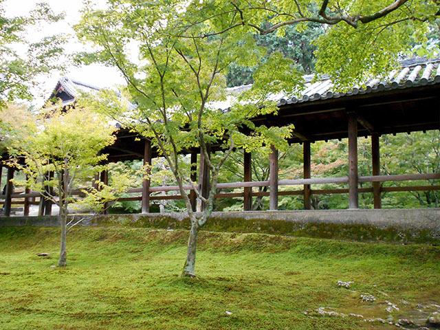 京都・東福寺(10月21日 月 2019年)_a0099744_17414977.jpg