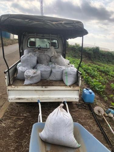 今朝は蚕豆とエンドウ豆の畝作りです_c0222448_15264495.jpg