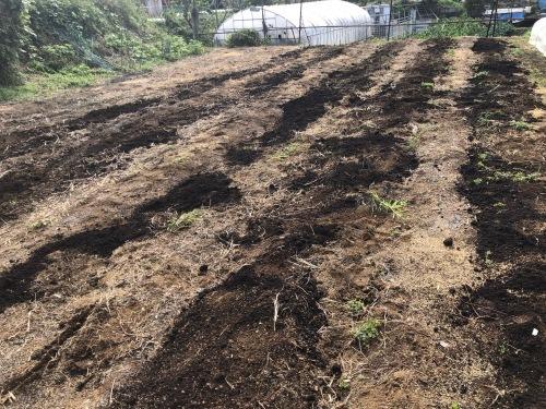 今朝は蚕豆とエンドウ豆の畝作りです_c0222448_15313195.jpg
