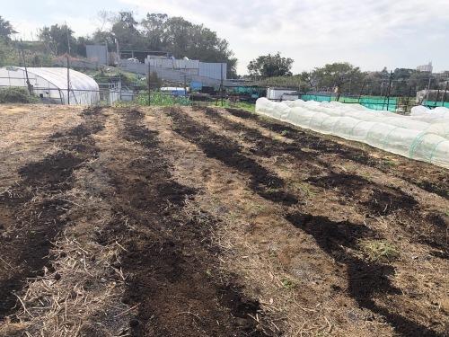 今朝は蚕豆とエンドウ豆の畝作りです_c0222448_15315258.jpg