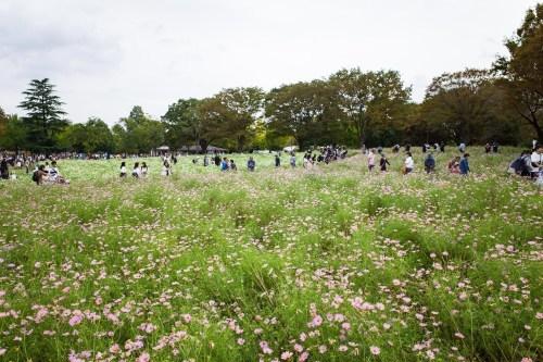 2019/10 昭和記念公園_c0098759_09225583.jpg