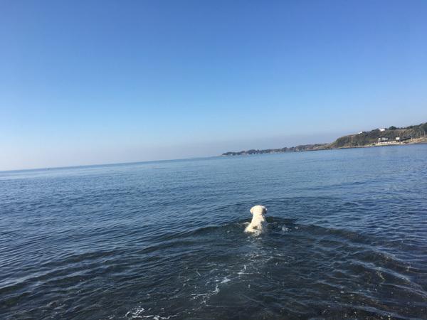 青空と真っ青な海!_c0110361_16011696.jpg
