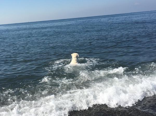 青空と真っ青な海!_c0110361_16013668.jpg