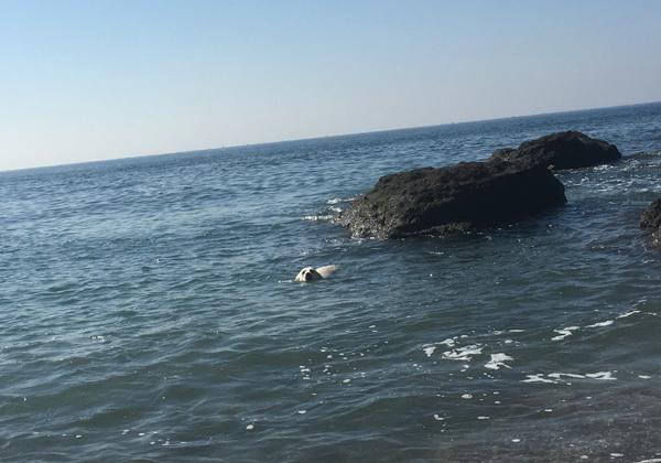 青空と真っ青な海!_c0110361_16021182.jpg