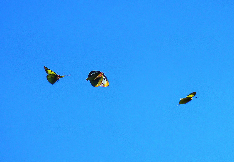 天空の蝶_f0215767_17331436.jpg