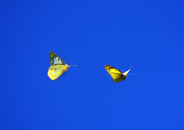 天空の蝶_f0215767_17332130.jpg