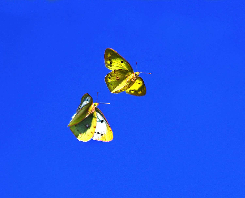 天空の蝶_f0215767_17332692.jpg