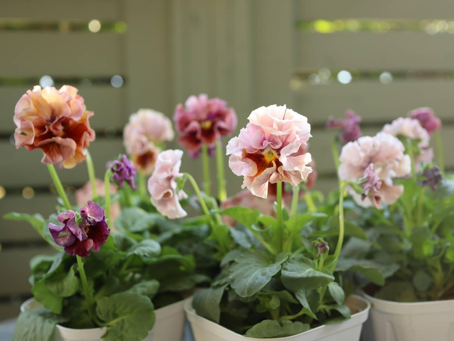 イベント出展や続々と入荷してくるお花に押され気味の日々_b0137969_06191204.jpeg