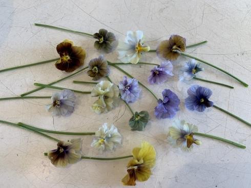 イベント出展や続々と入荷してくるお花に押され気味の日々_b0137969_06344002.jpeg