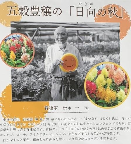 イベント出展や続々と入荷してくるお花に押され気味の日々_b0137969_06451690.jpeg