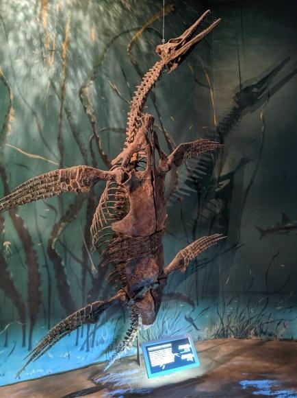 またまた、恐竜_d0193569_08133792.jpg