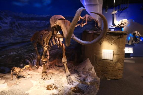 またまた、恐竜_d0193569_08135203.jpg