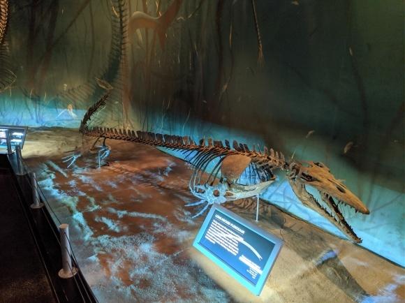またまた、恐竜_d0193569_08245266.jpg