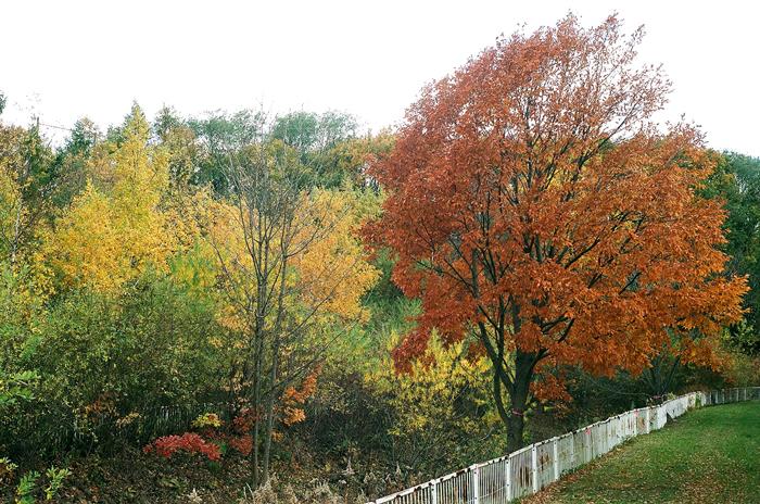 桜の紅葉と白樺の黄葉とレンズの絞り羽根_c0182775_11111633.jpg
